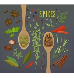 Spice herbal plants with spoons including cloves vector