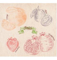 Fruit lemon apple banana kiwi country vector image