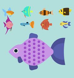 exotic tropical fish race different breed colors vector image vector image