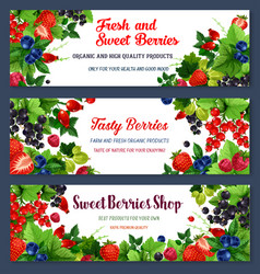 fresh sweet berries on banners vector image vector image