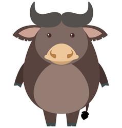 gray buffalo on white background vector image vector image