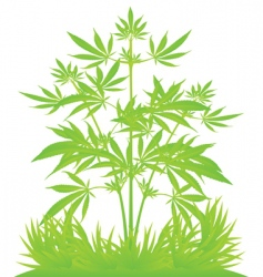 Isolated cannabis plants vector illustration vector