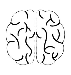 sketch brain human knowledge process vector image