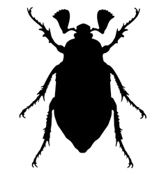 Cockchafer silhouette vector image