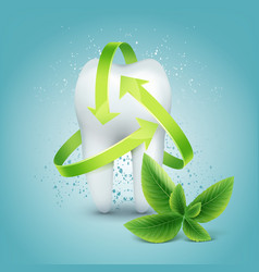 tooth with mint vector image
