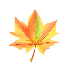 Leaf orange and green color autumn fallen object vector