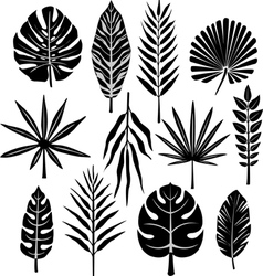 tropical leaf vector image