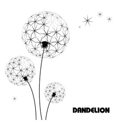 Abstract flower dandelion vector