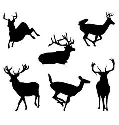 deers vector image