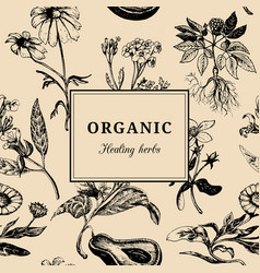 Hand drawn herbs organic healing plants vector