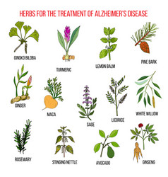 Collection of herbs for alzheimer disease vector