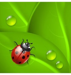 Green background with ladybird and dew vector