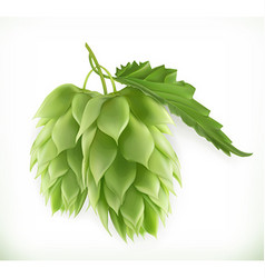 Hop plant 3d icon vector image vector image