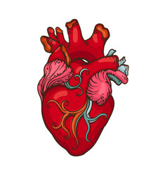 Drawing of stylized human heart vector