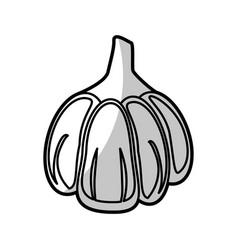 Garlic food nutrition - shadow vector