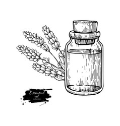 lavander essential oil bottle and bunch of flowers vector image vector image