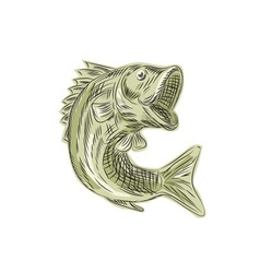 Largemouth bass fish etching vector
