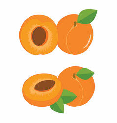 apricots colorful set vector image