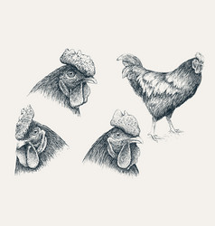 collection of rooster heads vector image