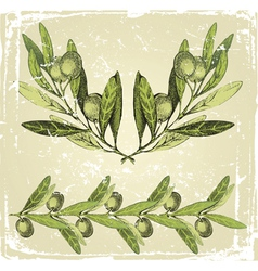 hand drawn olive branches ornament vector image vector image