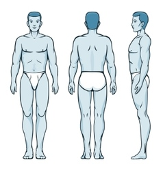 Man body model Front back and side human poses vector image