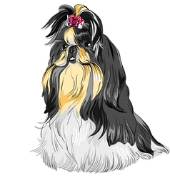 Sketch dog shih tzu breed vector