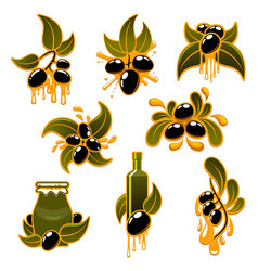 Green and black olives and olive oil icons vector