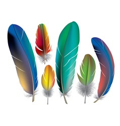 Colored feathers vector