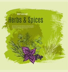 Natural spices and herbs poster for shop vector