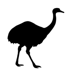 Greater Rhea Silhouette vector image