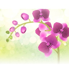 Purple orchid flower on a blurred background vector