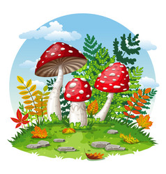 some fly mushrooms in autumn vector image vector image