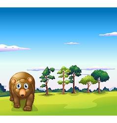 A big brown bear walking vector image