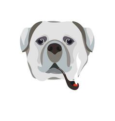 Bullmastiff breed dog with smoking pipe close-up vector