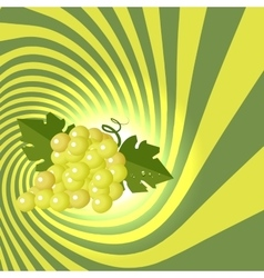 Striped spiral grape patisserie background Grape vector image vector image
