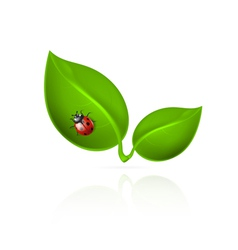 Red ladybird on green leaf vector image vector image