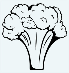 Fresh broccoli vector
