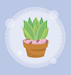 cute succulent plant in pot vector image