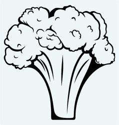 Fresh broccoli vector image vector image