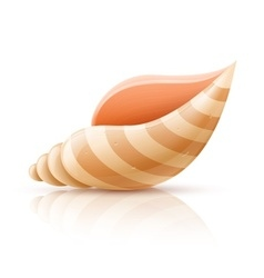 Seashell shellfish isolated vector image