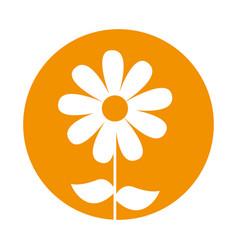 Cute sunflower garden isolated icon vector