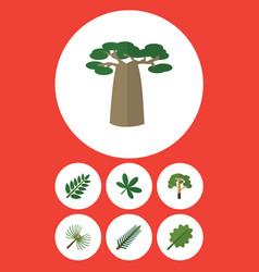 Flat icon natural set of alder wood acacia leaf vector