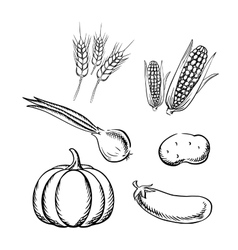 Ripe autumn vegetables and wheat sketch icons vector image