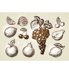 Set fruits sketch hand-drawn elements such as vector