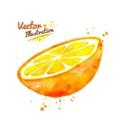 Watercolor half of an orange vector