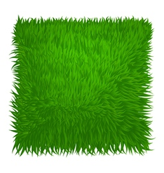 Green grass texture vector