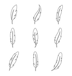 bird feather line art collection vector image vector image