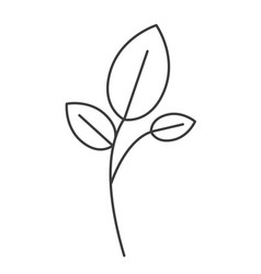 Monochrome silhouette of branch and leaves vector