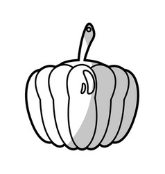 pumpkin food nutrition - shadow vector image