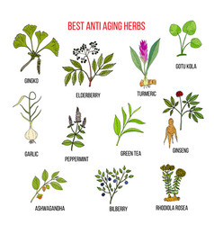 Collection of anti aging herbs vector